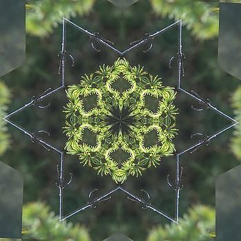 Valerie Kirkwood - Tamarack Kaleidoscope 1