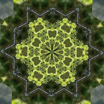 Valerie Kirkwood - Tamarack Kaleidoscope 2