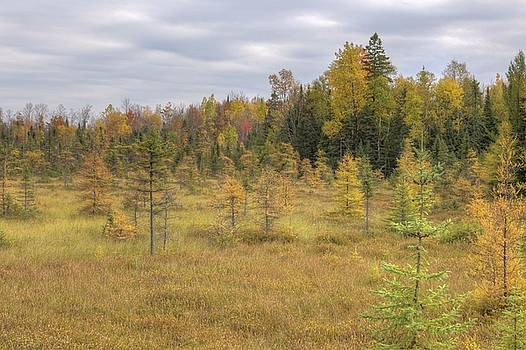 Tamarack Field Fall Color, Northern Wisconsin by Paul Schultz