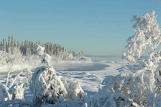 Tanana River in Fairbanks Alaska by Dee Carpenter