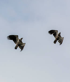 Gloria Anderson - Tandem eagles