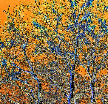 Tangerine Light by Ann Johndro-Collins