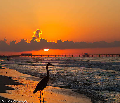 Tangerine sunrise  by Kim Loftis