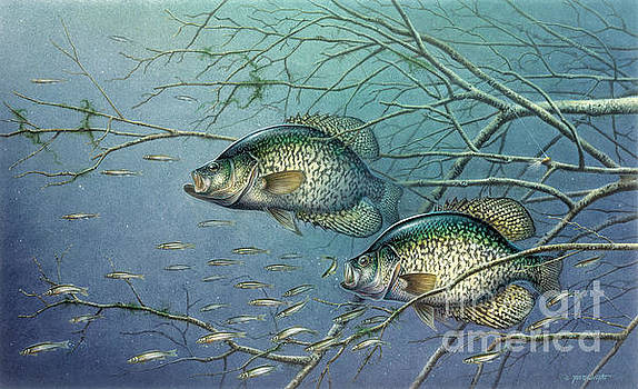 Jon Wright - TANGLE COVERED CRAPPIE