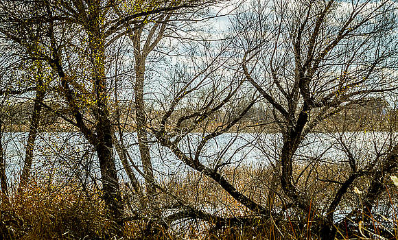 Tangled at the Bosque by Julie Basile