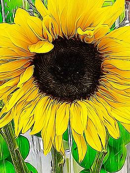 Tangled Sunflower  by Collette Rogers