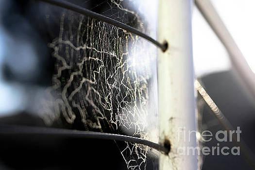 Tangled Web We Weave by Kip Krause