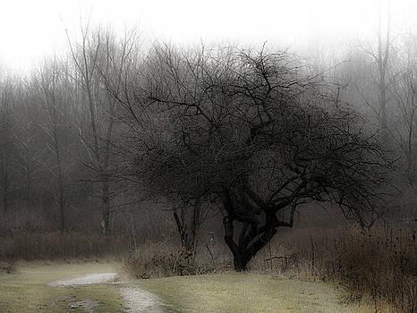 Tanglewood by Scott Heister