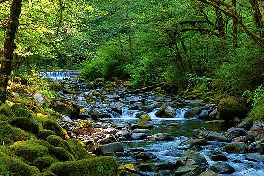 Tanner Creek by Dee Browning