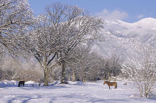 Taos January 2008 by Lynard Stroud