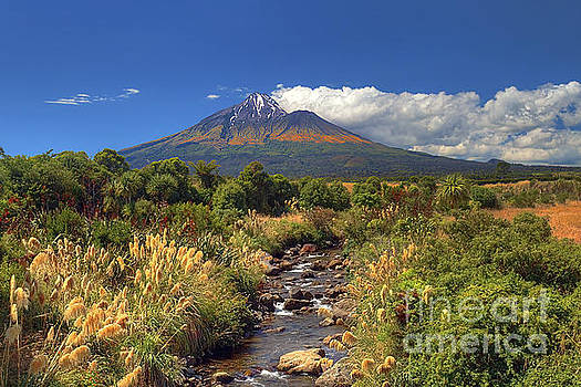 Taranaki Gold by Peter Kennett