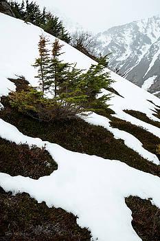 Tardy Spring by Tim Newton