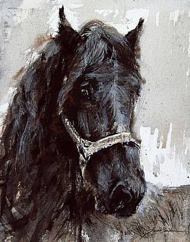 Tarhra- Horse Head study One by Susie Gordon