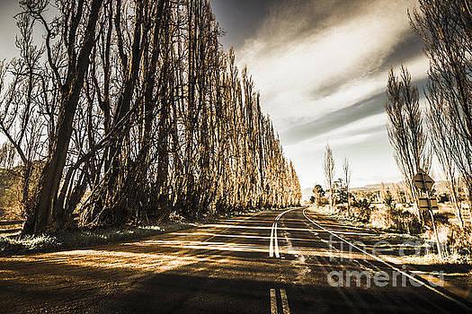 Tasmania scenic drive by Jorgo Photography - Wall Art Gallery