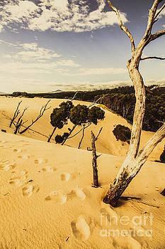 Tasmanian desert tree landscape by Jorgo Photography - Wall Art Gallery