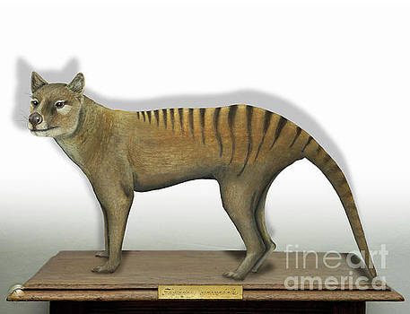 Tasmanian Tiger-Thylacinus cynocephalus-Tasmanian Wolf-Lobo de Tasmania-Tasmanian Loup-Beutelwolf    by Urft Valley Art