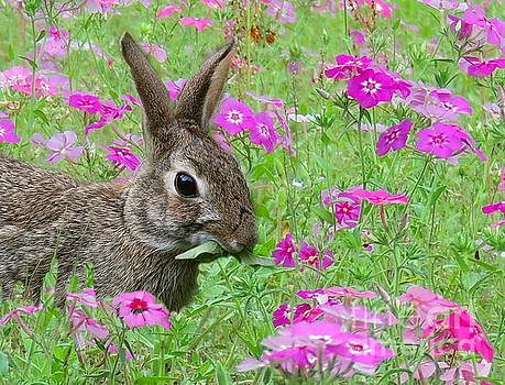 Tasty Flowers by Myrna Bradshaw