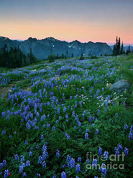 Tatoosh Dawn Glow by Mike Dawson