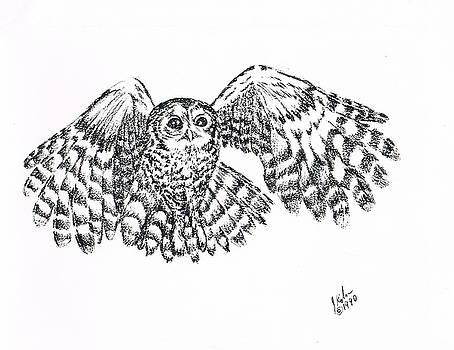Tawny Owl by Joann Renner