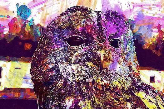 Tawny Owl Strix Aluco Owl Bird  by PixBreak Art