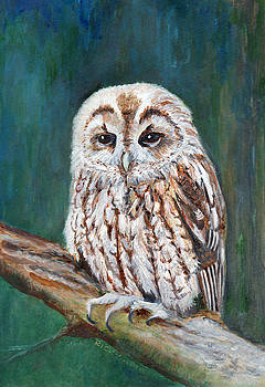 Tawny Owl by Veronica Rickard