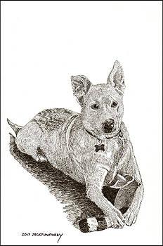 Jack Pumphrey - Taz  Rescue pound dog