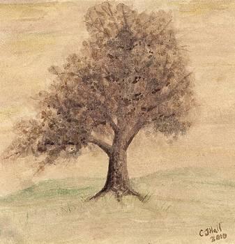 Tea and Coffee Tree by Chris Hall
