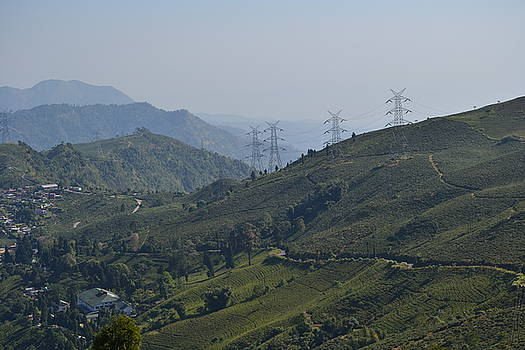 Tea garden on hill  by Atul Daimari