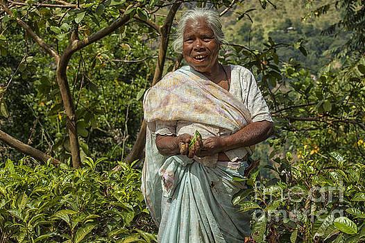 Patricia Hofmeester - Tea picker in Sri Lanka