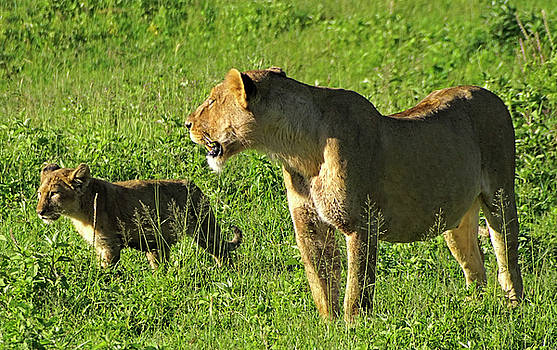 Dennis Cox WorldViews - Teaching Cub to Hunt