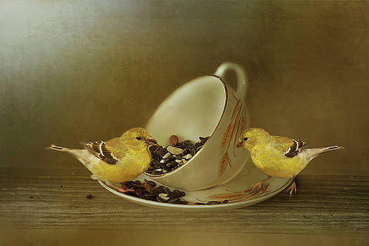 Teacup Goldfinch Feeder by TnBackroadsPhotos