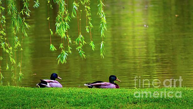 Teal Ducks 2 by JB Thomas