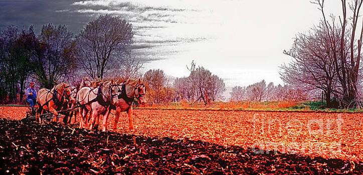 Team Of Draft Horses Plowing Early Spring  by Tom Jelen
