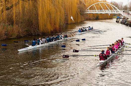 Teams of rowers on river Cam by Andrew  Michael