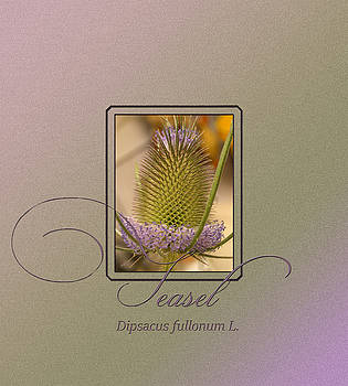 Teasel by Patricia Whitaker