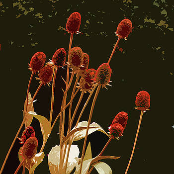 James Hill - Teazels in a Secret Garden