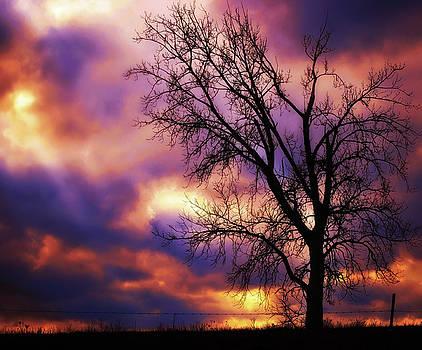 Techicolor Sunset by Virginia Folkman