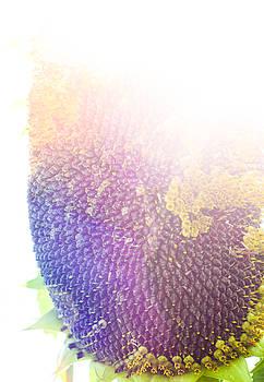 Technicolor Sunflower by Christi Kraft