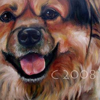 Teddy Bear by Lucky Dogs