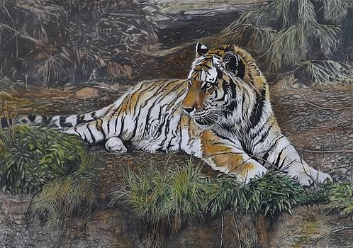 Tempted- tiger by Susie Gordon