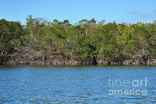 Bob Phillips - Ten Thousand Island Landscape Two