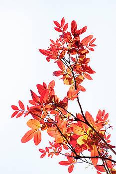 Tender leaves by Hitendra SINKAR