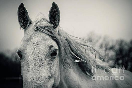 Dimitar Hristov - Tender White Horse Portrait Close Up