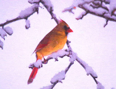 Tender Winter Cardinal by Daphne Sampson