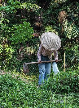 Tending the crops by David Lane