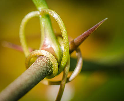 Tendril by Don L Williams