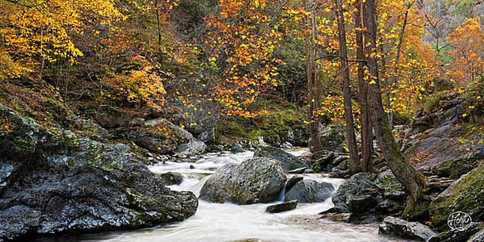 Tennessee Colors by Brad Hoyt