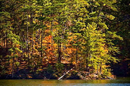 Tennessee Fall Trees by Paul Bartoszek