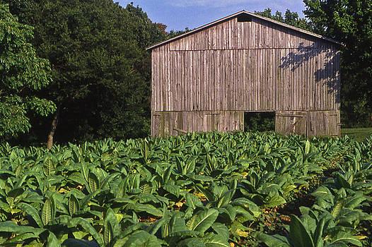 Tennessee Tobacco Barn by Randy Muir