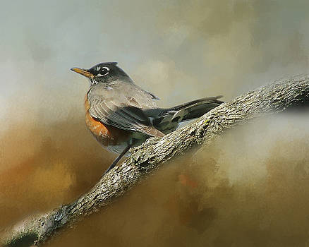 Teressia's Spring Robin  by TnBackroadsPhotos